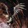 cherubim kullanıcısının profil fotoğrafı